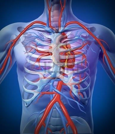 Как сделать ЭКГ сердца в домашних 35